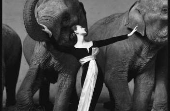Dovima+with+elephants,+Evening+dress+by+Dior,+Cirque+d'Hiver,+Paris,+August+1955_102.1